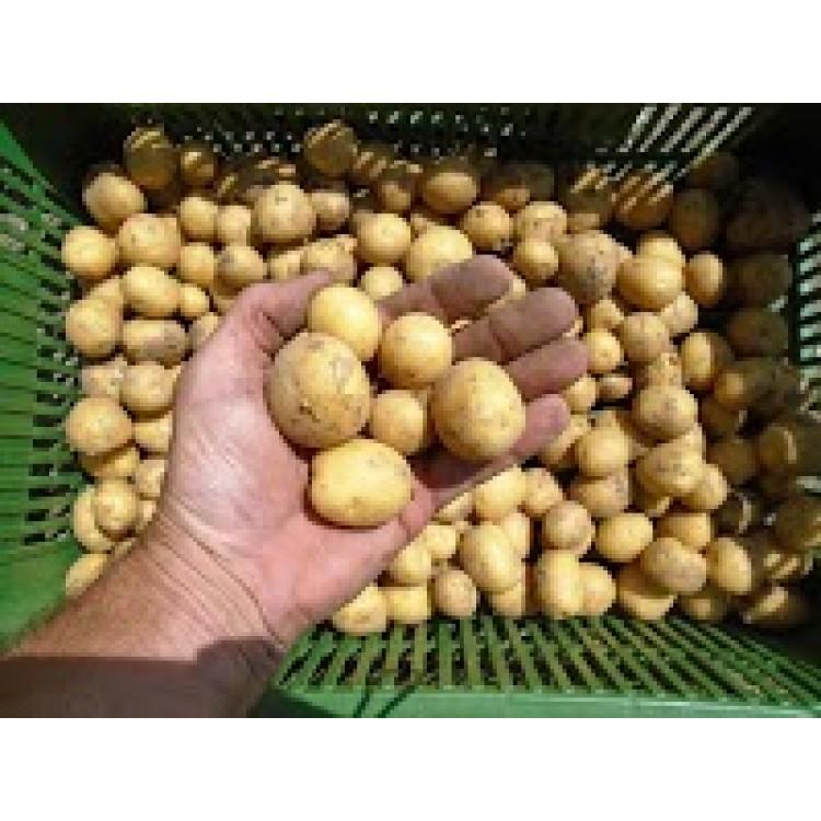 Malé zemiačky 3kg