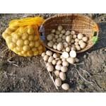 Gazdovské zemiaky - staré 1kg
