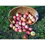 Jablká 1kg