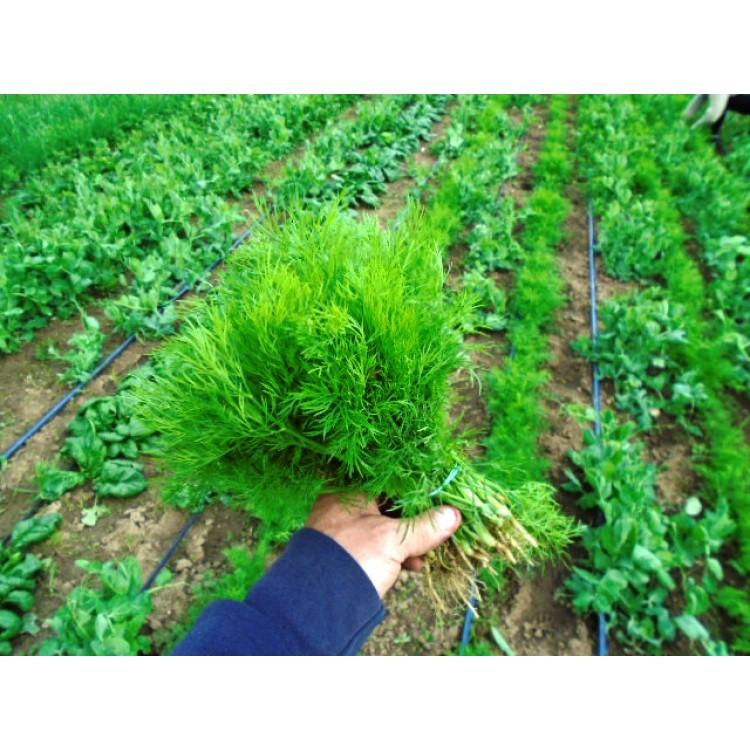 Zelený kôpor 1zväzok
